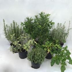 Aromatiques de saison x3