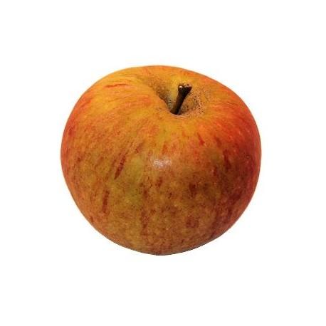 Cox's orange