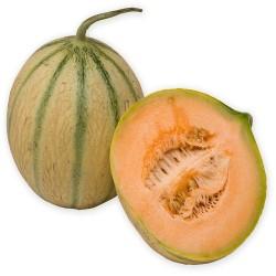 Melon greffé