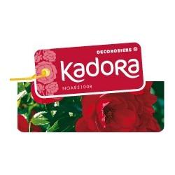 Kadora décorosier