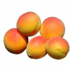 abricot polonais
