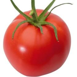 Tomate Montfavet