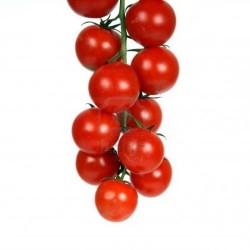 Tomate Cerise