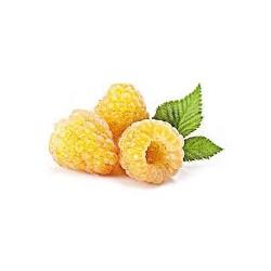 Framboisier jaune